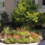 horticultura-garden-coaching-design-victoria-3968
