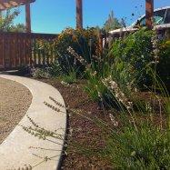 horticultura-garden-coaching-design-victoria-0226