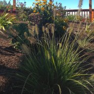 horticultura-garden-coaching-design-victoria-0231