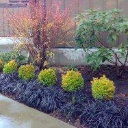 horticultura-garden-coaching-design-victoria-0664